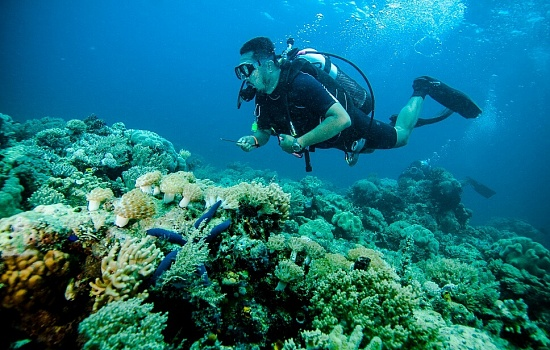 business plan for a dive shop Complete donut shop business plan with donut business plan model to achieve financing.